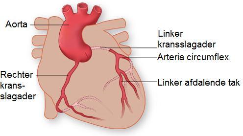 Kransslagaders hart