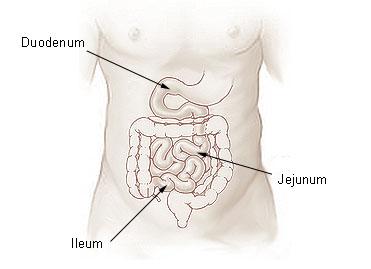 Duodenum twaalfvingerige darm