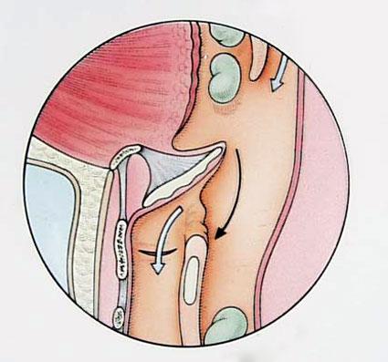 Epiglottis werking