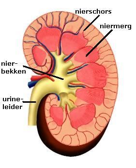 Nierbekkenontsteking